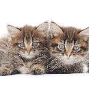 Le coryza du chat : symptômes et soins
