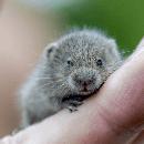 Comment éviter les morsures des hamsters ?