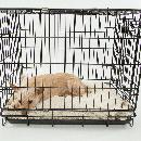 Cage pour chien: bien choisir la cage de transport