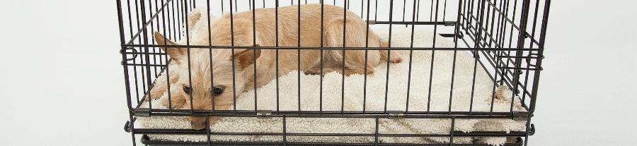 Cage pour chien : bien choisir la cage de transport