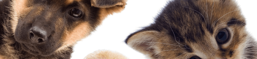 Bien choisir son assurance animaux