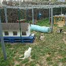 CAPPA 27 : un combat sans relâche contre l'abandon des chats