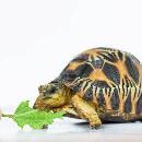 10 choses à savoir avant d'acheter une tortue de terre