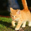 Conseils si vous trouvez un chaton dans la rue