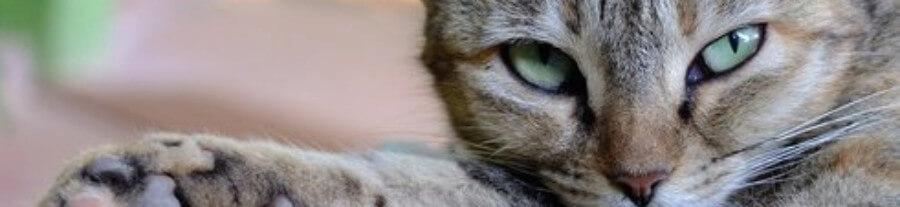 21 photos de chats aux yeux verts