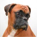 10 syndromes de cancer chez le chien