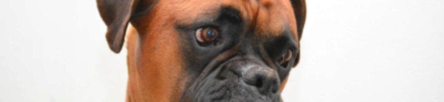 10 symptômes de cancer chez le chien
