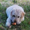 Les alternatives aux croquettes classiques pour chiens