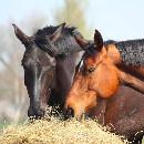 L'équitation et ses bienfaits pour l'enfant