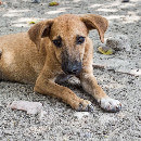 Vous avez trouvé un animal abandonné : comment agir ?
