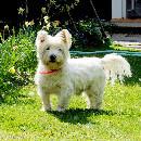 Solutions de garde de chien: pension pour chien, chenil et leurs alternatives