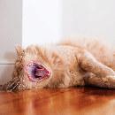 5 signes qui indiquent que votre chat s'ennuie