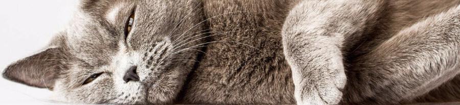 Mon chat perd ses poils : comment réagir ?