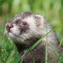 Rongeurs, oiseaux, NAC – comment protéger vos animaux contre la chaleur ?
