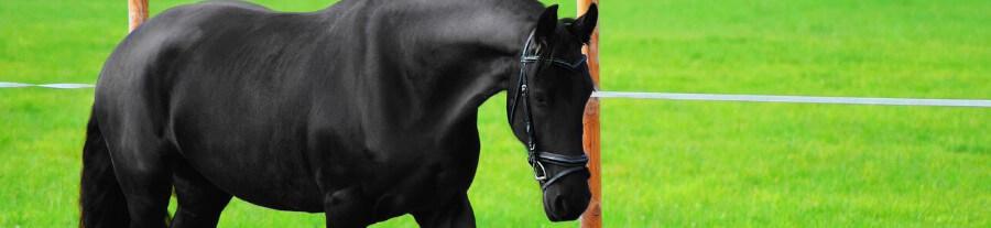 Pension pour chevaux : quelles solutions pour loger son cheval ?