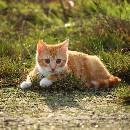 Conseils pour protéger votre chat des dangers de l'été