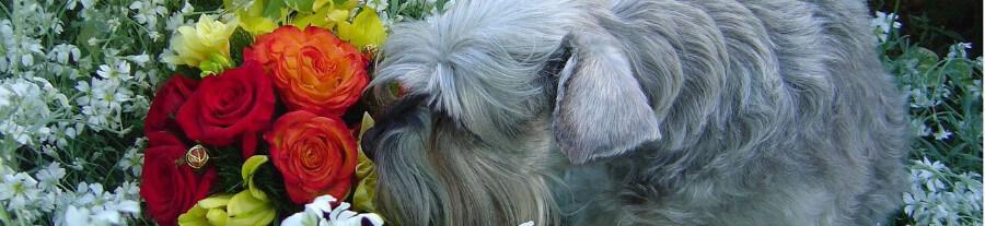Aromathérapie pour animaux : comment les soigner avec les huiles essentielles ?
