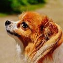 Pourquoi mon chien tremble?