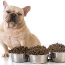 Comparatif des croquettes pour chien