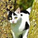 L'identification pour chat