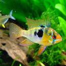 10 poissons d'eau douce