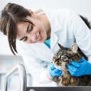 Tout savoir sur la vaccination du chat