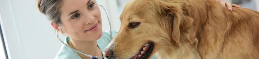 Tarif vétérinaire de garde