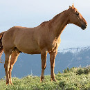 7 conseils avant d'acheter un cheval