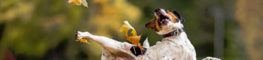 12 images d'animaux pour fêter l'arrivée de l'automne