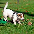 Canirun : un nouveau concept d'activité sportive canine en France