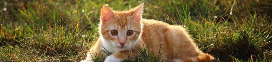Mon chat est perdu : 5 moyens pour le retrouver
