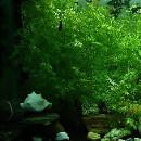 Comment nettoyer mon aquarium ?