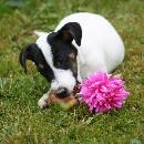 L'alimentation pour chiens : les bienfaits de l'alimentation ménagère