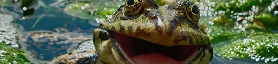 Comedy Wildlife Photo : découvrez la première sélection du jury