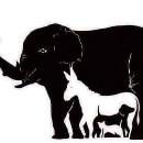 Combien d'animaux voyez-vous sur cette photo ?