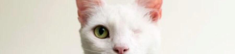 Nouveau projet d'Elise Casey : photographies des chats borgnes ou aveugles en attente d'adoption