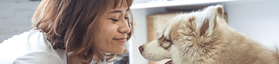 Un crédit d'impôt pour aider à la stérilisation des animaux de compagnie