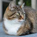 L'alimentation du chat stérilisé