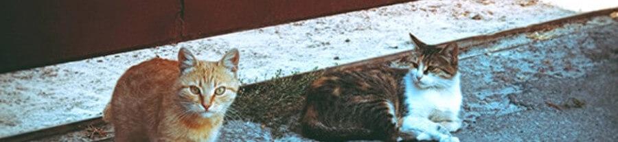 Une journée portes fermées dans les refuges pour la stérilisation obligatoire des chats