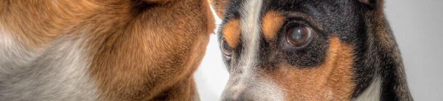 Que faire quand mon chien est attaqué ?