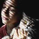 Les personnes préférant les chats seraient plus intelligentes que les autres