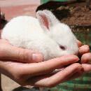 Comment jouer avec son lapin ?