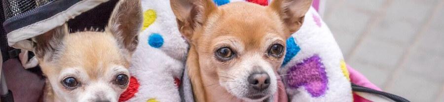 Assurance pour chiens : Guide et devis en ligne