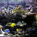 Conseils pour bien débuter avec un aquarium d'eau de mer