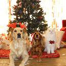 Plus de 8 Français sur 10 offriront un cadeau de Noël à leurs animaux de compagnie