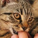 Pourquoi mon chat me mordille-t-il ?