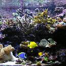 10 poissons pour un aquarium d'eau de mer
