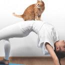 Le Cat Yoga ou comment faire du Yoga avec un chat