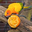 Alimentation des perroquets