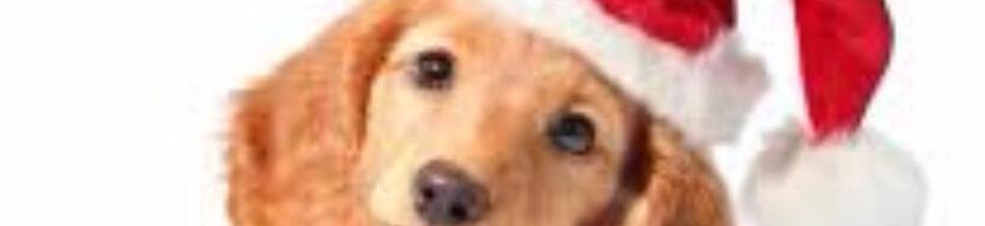 Est-ce une bonne idée d'offrir un chien ou un chat pour Noël ?